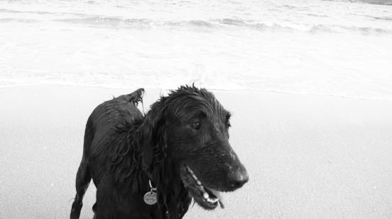 Liffey Wonder Dog